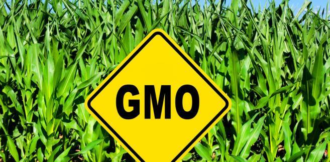 gmo-rolnictwo