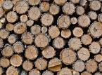 Przemysł drzewny nie zyska dzięki nawałnicom. Dodatkowego surowca nie będzie