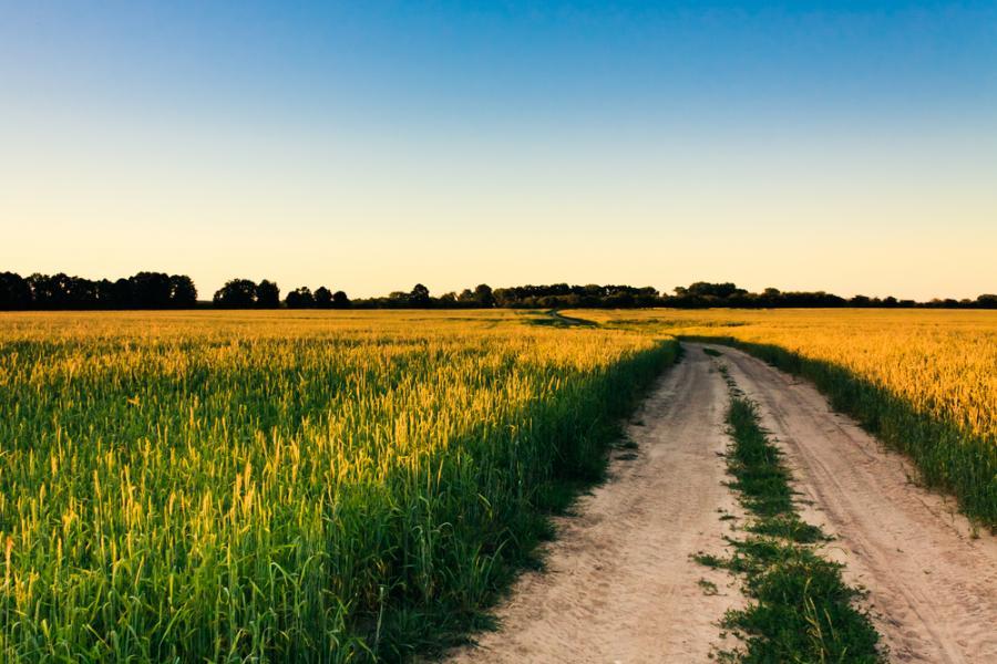 pole, rolnictwo, uprawa