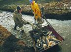 Prawda o taniej rybie: To wielki biznes, który często wiąże się z łamaniem praw człowieka