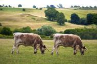 Unia na pięć lat chce zakazać produkcji sklonowanego mięsa