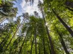 Opryski w opolskich lasach: LP będą zwalczać chrabąszcza majowego i kasztanowca