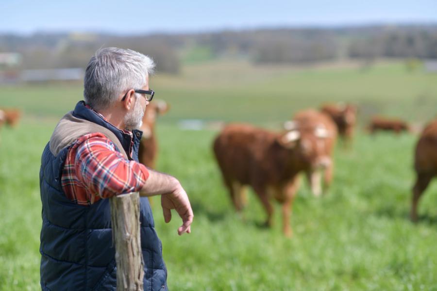 rolnik, rolnictwo, krowa, hodowla